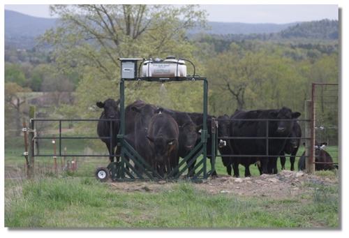 Cattle Sprayer